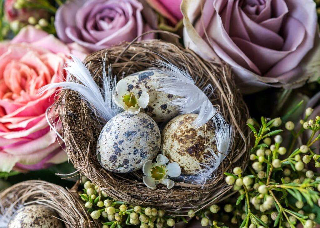 Roses et œufs